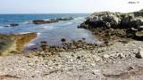Along Newport Shore