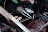 Pine Knoll Shores NC-5057.jpg