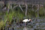 Pine Knoll Shores NC-5157.jpg