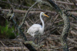 Pine Knoll Shores NC-5163.jpg