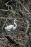 Pine Knoll Shores NC-5164.jpg