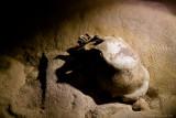 Aktun Tunichal Muknal Caves