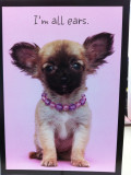 Chihuahua Themed Cards, etc.