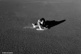 IMG_8680 (Love Is An Island)