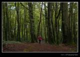 Forest' goblins