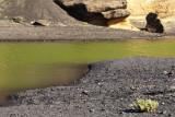 The green lagoon
