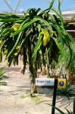 epcot2011-15.jpg