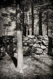 Single Tree and Stone Wall