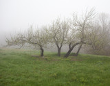 Foggy Day on Blue Hill Mountain #5