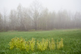 Foggy Day on Blue Hill Mountain #4