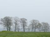 Foggy Bayside Trees #1