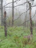 Color in Foggy Marsh