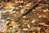 Fallen Leaves in Water with Stick