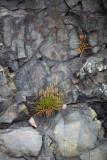 Plants in the Rocks