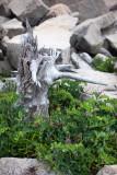 Weathered Pine Stump