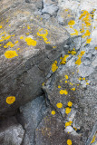 Lichens on Rocks