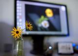 Desktop Daisies