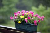 Planter in the Rain