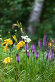 Liatris and Lilies by Birch