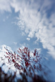 Red Leaves, White Clouds, Blue Sky – Whoosh!