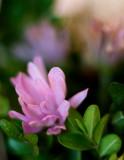 Little Flower in a Basket
