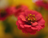 Wildflower Bouquet Closeup #1