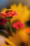 Wildflower Bouquet Closeup #6