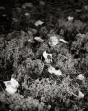 Fallen Leaves on Reindeer Moss
