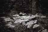 Ferns by Tree