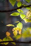 _MG_4969-Edit-Edit.jpg