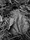 Grounded Leaves