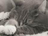 Jenni Sleeping, Head in Paws
