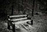 Bench by Fallen Tree
