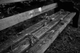 Bench with Pine Cones
