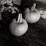 Two Little Pumpkins