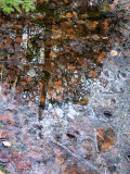 Puddle Reflection with Ice