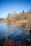 Reeds at Pond Edge