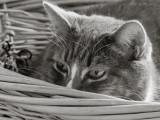 Jenni Peeking Out of Her Basket