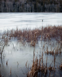 Reeds in Little Long Pond Overflowed and Frozen