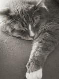 Sleepy Jenni