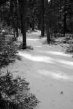 Sun-dappled Path