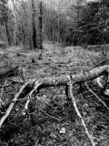 Fallen Tree in the Lush