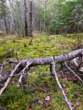 Fallen Tree in Lush Green