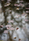 Lily Pond and Reflections #1