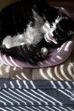 Keira Sleeping in Striped Light