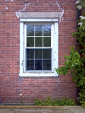 Tulip and Window