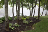 Trees and Lawn Planting by Union River #2