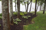 Trees and Lawn Planting by Union River #3