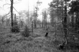 Foggy Wetland Monochrome