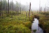 Foggy Wetland Glow #3